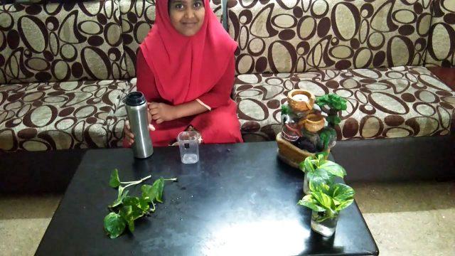 Indoor garden ideas for children using money plant