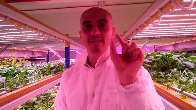 Indoor farming in Singapore: growing high quality greens without pesticides, weather risk, nor waste