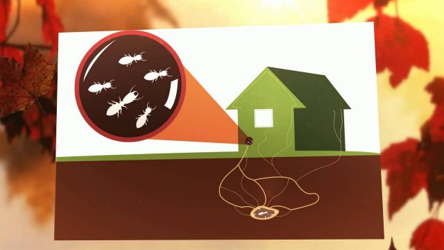 What's the Best Termite Treatment in Weston? | Accurate Pest Control, Inc.