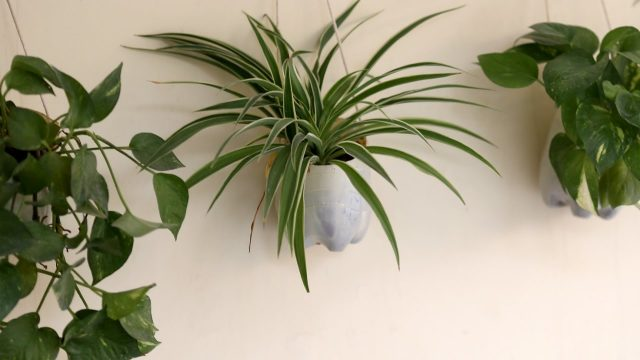 How to Make Hanging Planters from Plastic Bottles(Urdu)