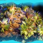 SUCCULENT JELLYFISH! The Hanging Basket Jellyfish Challenge! Pt. 2 Upside-Down Planter