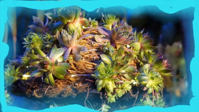 SUCCULENT JELLYFISH! The Hanging Basket Jellyfish Challenge! Pt. 2 Upside-Down Planter