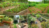 50+ Fantastic Backyard Vegetable | Garden Ideas