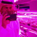 Badia Farms – The GCC's first indoor vertical farm