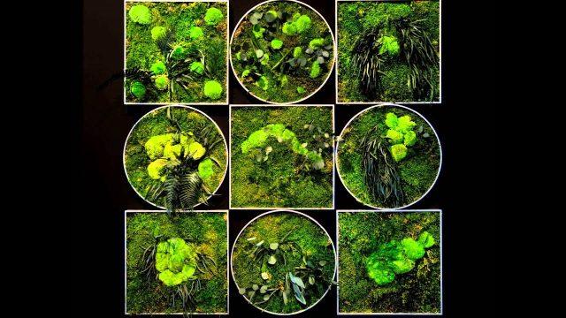 Preserved Plant Wall Decor Şoklanmış bitki duvar dekorları