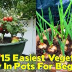Easiest Vegetables To Grow In Pots For Beginners
