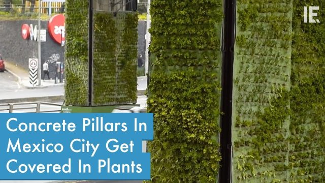 Vertical Gardens Project