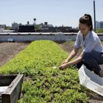 Extensive Green Roofs – Readymade Sedum Mats – Characteristics