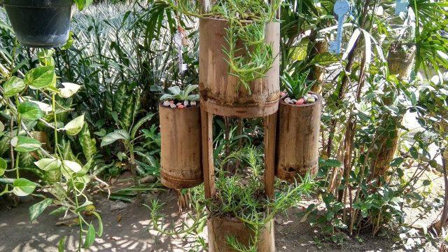 Creative Hanging Planter Ideas   DIY Moss Rose & Succulent Planter From Bamboo