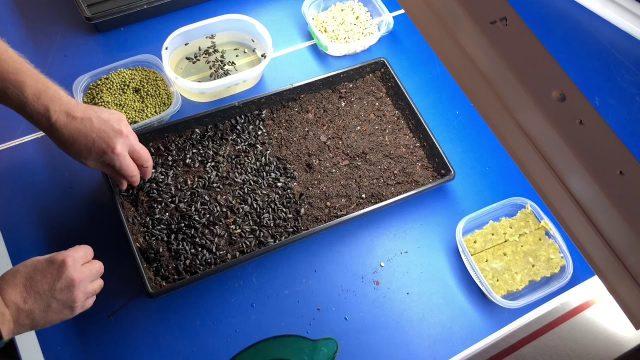 Indoor gardening pt 2 microgreens