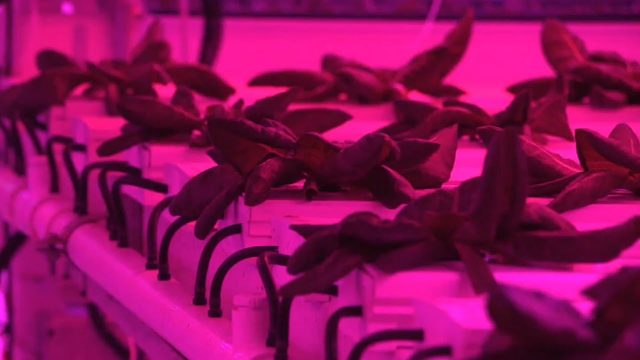 Future Farming: Indoor farming provides alternative to traditional agriculture