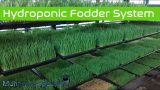 Making of  hydroponic  Fodder system