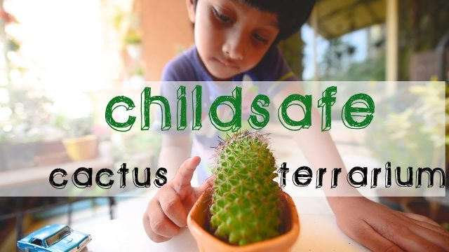 How to make a Child-safe Closed Cactus Terrarium | Gardening Ideas