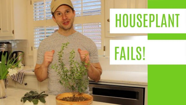Houseplant FAILS! Indoor Gardening Lessons from Trial and Error