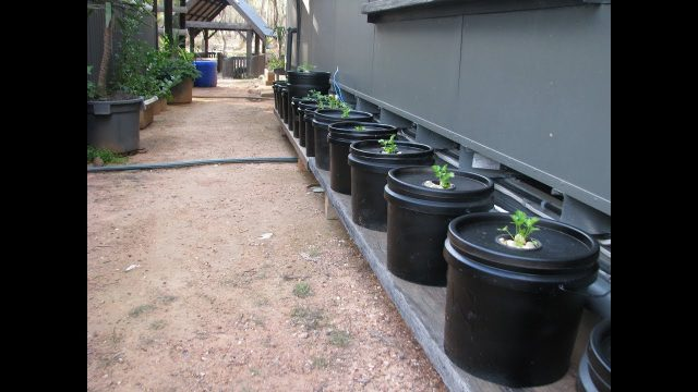 Off the Grid  Kratky Method of Hydroponics (guerilla buckets)