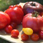 Start A Garden With Raised Vegetable Garden Beds – GardenFork