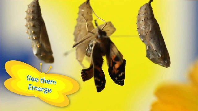 Education Supplies – Insect Lore's Butterfly Bungalow Kid's Garden Toys
