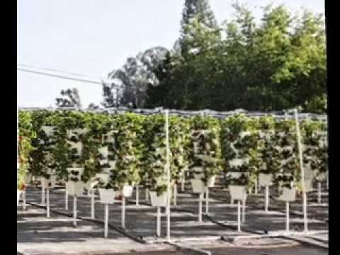 Vertical hydroponics design ideas