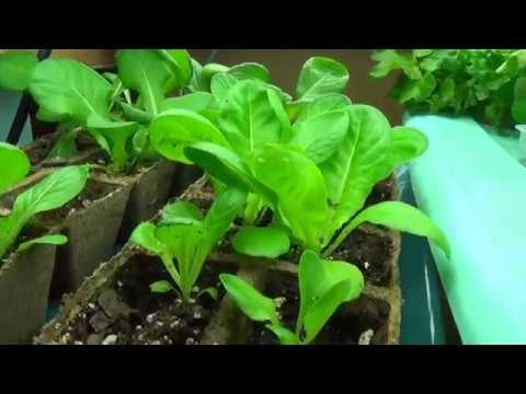 DIY Indoor Hydroponics – SUPER CHEAP