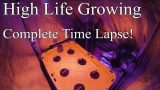 The Complete Cannabis Hydroponics Time Lapse!