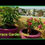 Do you love plants ? Go Green | My Terrace Garden Tour | Roof Top plant garden | Plants Love 🌿🌳🍀