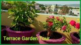 Do you love plants ? Go Green | My Terrace Garden Tour | Roof Top plant garden | Plants Love 🌿🌳🍀
