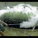 WHY NOT TO SUPPLEMENT CO2 IN YOUR GROW ROOM! – INDOOR GARDENING