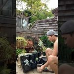 Setting up a succulent wall (living wall)