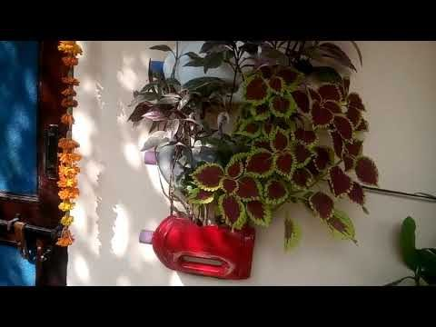 867 – Beautiful & unique Wall Hanging Planter for indoor and outdoor purpose (Hindi /Urdu) 11/11/18
