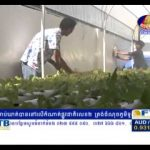 Hydroponic in Cambodia –  Bayon TV – Khmer agriculture