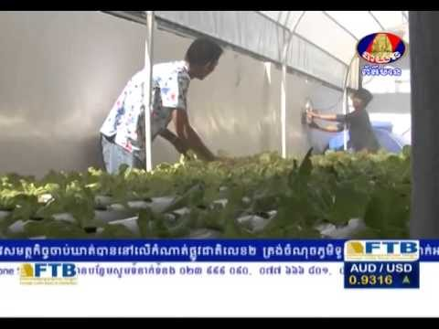 Hydroponic in Cambodia –  Bayon TV​ – Khmer agriculture