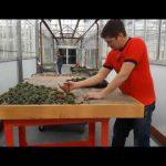 Building A Living Succulent Wall Timelapse: Gardenscape 2018