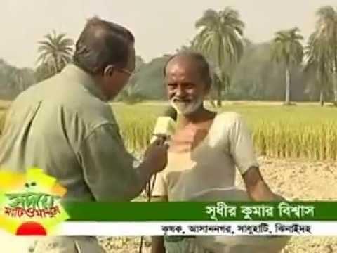 Jhenidah hori Dhan I hydroponic Agriculture IBest Capsicum Farming