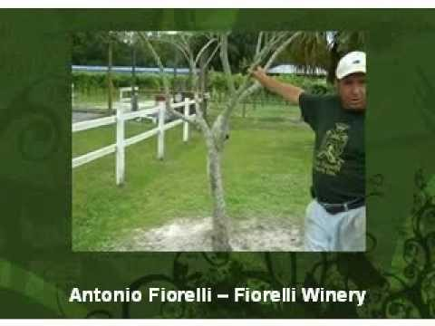 Meet Antonio Fiorelli and the 2010 Florida Small Farms Conference