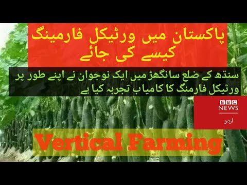 In Pakistan ( vertical farming ) Kam Pani men farming karne ka Bahtreen tareeqa he