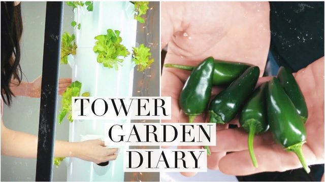 Indoor Tower Garden Diary #2