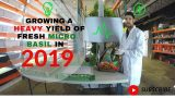HOW TO GROW HERBS/MICRO-GREENS IN 2019 (VERTICAL HYDROPONIC)