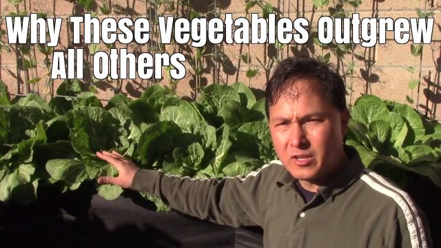 Why These Vegetables Outgrew All Others in My Organic Garden