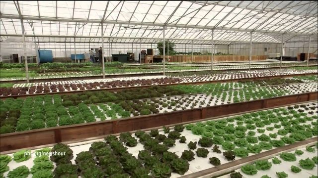 Aquaponic farming saves water, but can it feed the country?