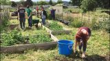 Creswell School Garden — SPARK! Creative Learning Grants Project Spotlight
