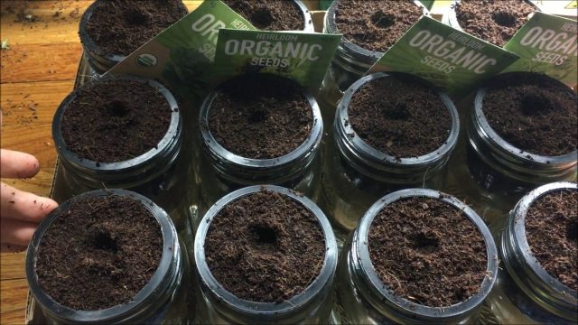 How To Make Cheap Glass Jar Hydroponic Kratky System – Starting Seeds – Complete: Step by Step Guide