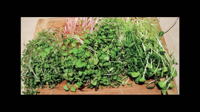 Peter Burke on Indoor Salad Gardening