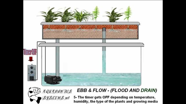 Hydroponics Flood and Drain System
