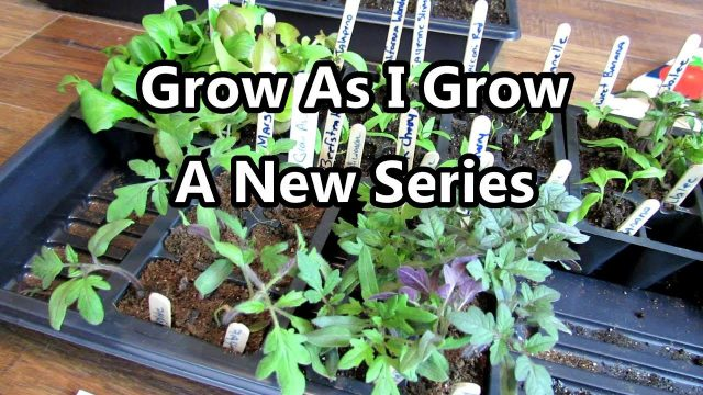 My New Vegetable Gardening Series: Grow As I Grow – A Quick Series Introduction