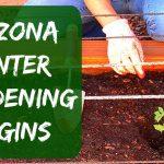 Arizona Winter Gardening – Starting Tomatoes, Bell Peppers, Cucumbers & Herbs
