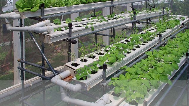 Science Project (Hydrophonics)