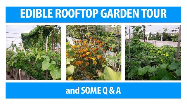 Edible Rooftop Gardening 2019