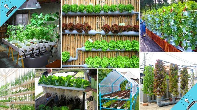 Wow! 50 Ideas | Hydroponic Vegetable Gardening | Garden Ideas