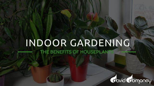 Indoor Gardening: The Benefits Of Houseplants