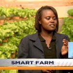 SMART FARM | Hydroponics Farming